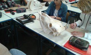 Anatomisches Zeichnen in der EF. Die Exponate entstammen der umfangreichen biologischen Sammlung.