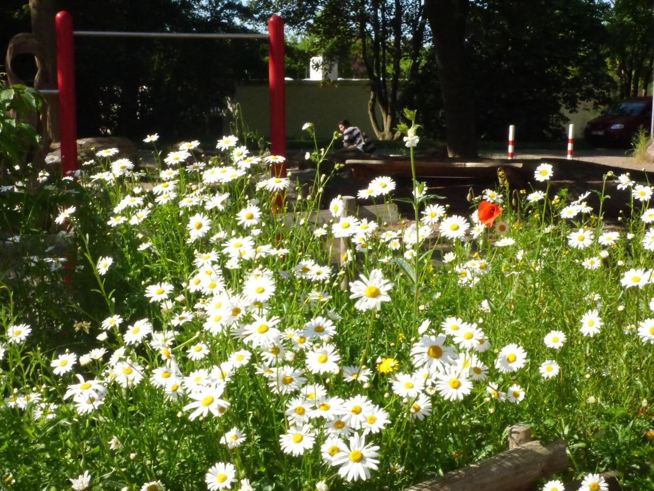 Schulhof mit Wildblumen